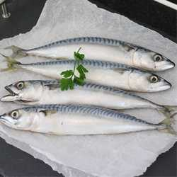 Nutriment Fresh Mackerel Whole - Raw - For Dogs - 1kg